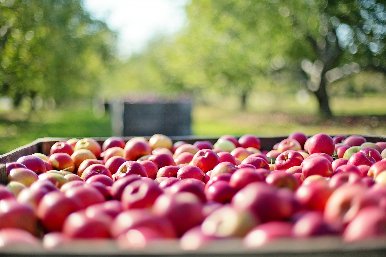 best apple picking near bayonne