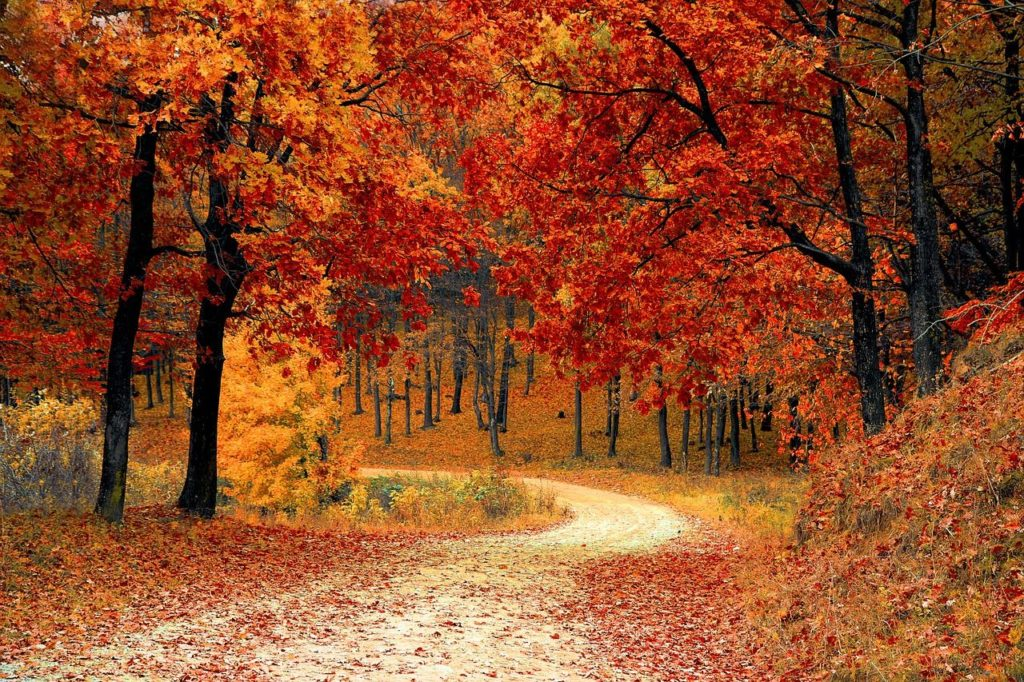 fall foliage day trips from bayonne